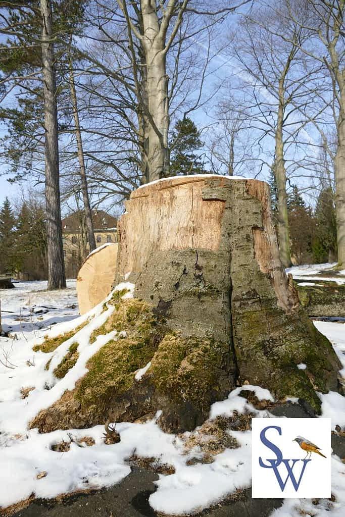 Im Park Dösen erfolgt die Abholzung von über 100 Jahre alten Bäumen die geschützt sind.