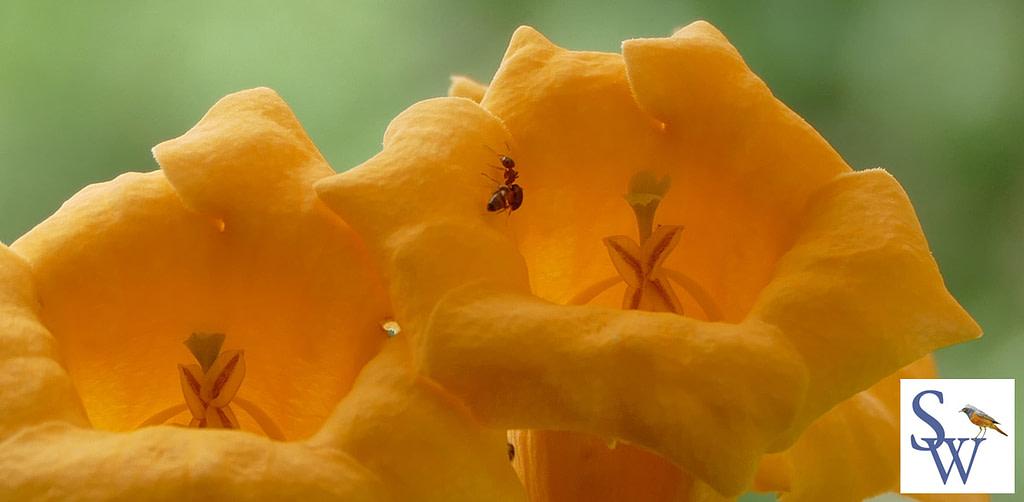 Ameisen - kleine nützliche Helfer im Garten -  Foto von Sylvia Wentzlau